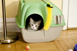 Dog Proof Litter Box -Photo by eviltomthai on Flickr