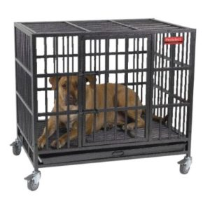dog crate one